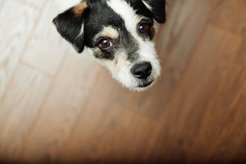 Der Bürohund – Vierbeiner gegen Stress am Arbeitsplatz
